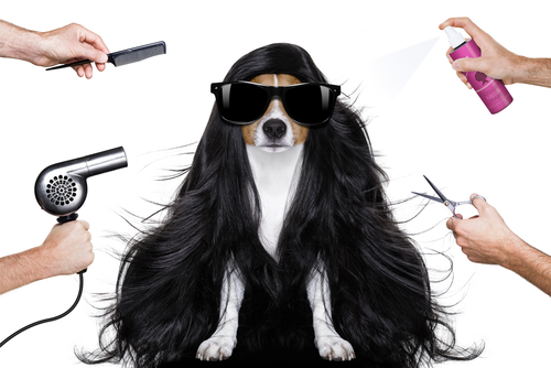 Wie werde ich Hundefriseur