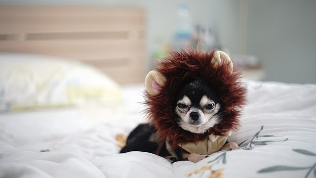 haarausfall beim hund gesunde hundenahrung gesunde hundenahrung. Black Bedroom Furniture Sets. Home Design Ideas