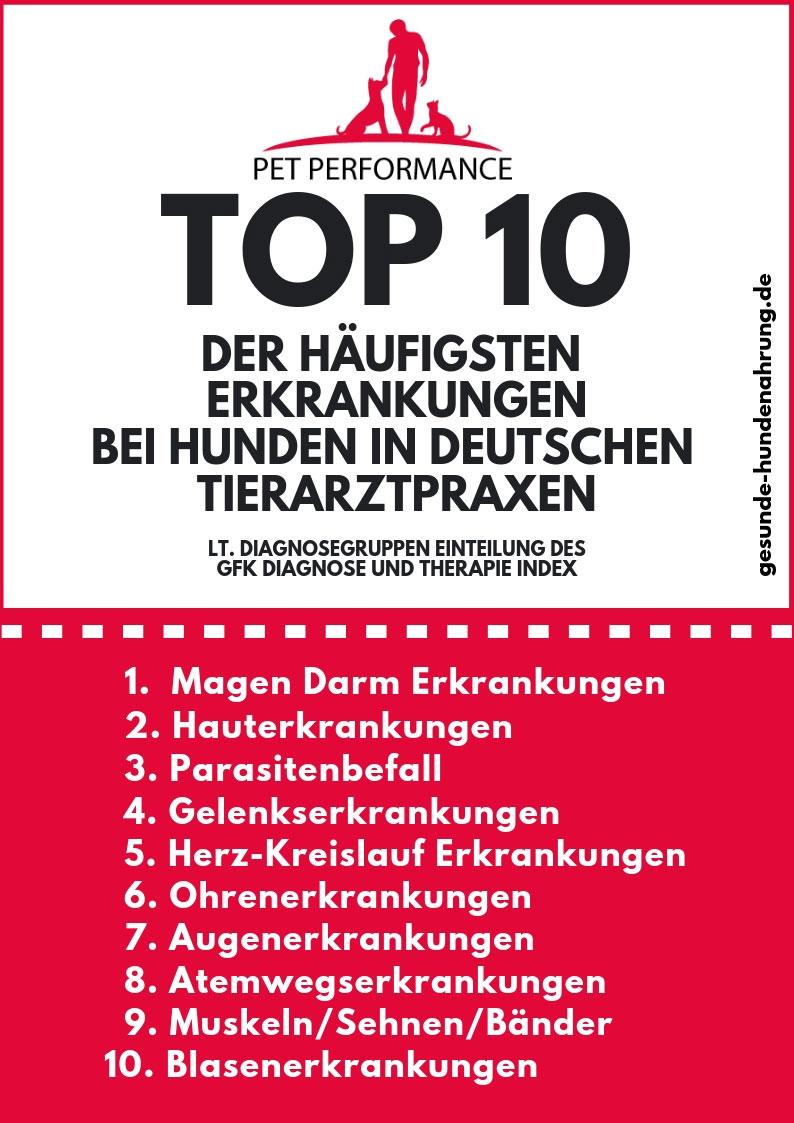 TOP 10 der häufigsten Erkrankungen beim Hund