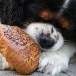 Ist es okay Hunde vegan zu ernähren?
