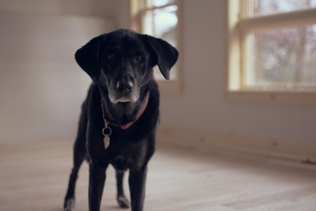 Hilfe mein Hund scheint dement zu sein - Das kannst du tun!